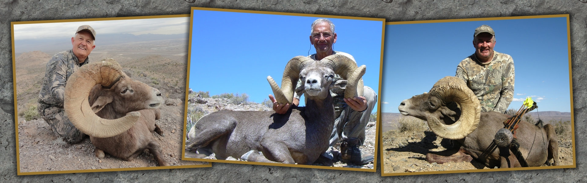 Nevada Bighorn Sheep Hunts